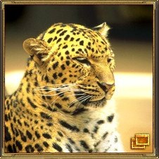 Леопард означает храбрость.