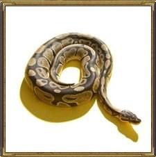 Змея - символ вечного движения и обновления вселенной. Представляет мудрость, глубокие знания, а также является символом женской красоты.