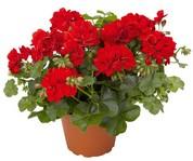 Растения и животные в вашей квартире