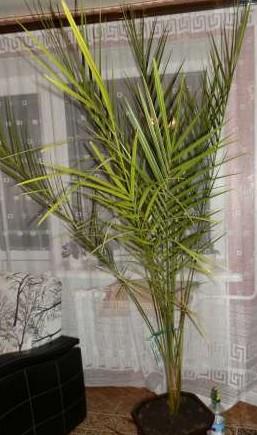Верба - дерево девяти жизней