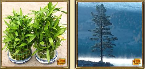 бамбук сосна