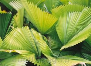 Топ 10 растений для очистки воздуха и улучшения фэн-шуй дома и офиса