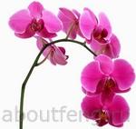 орхидея символ фэн-шуй