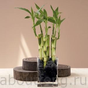 бамбук в фэн-шуй