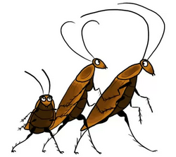 Если завелись тараканы