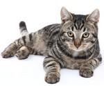 приютить бездомного кота