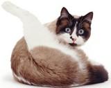 чтобы кот стал домоседом