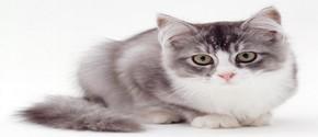 Кошка — талисман жилья