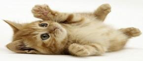 если кошку беспокоит что-то