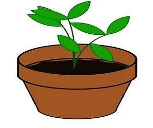 Ритуал выращивания удачи