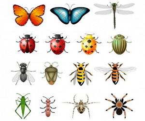 насекомые-талисманы