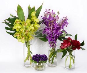 какие букеты цветов полезны