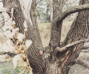 дуб символ благоволучия