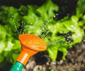 Горячий душ для вредителей сада
