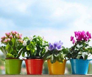 Подкормки для цветов в домашних условиях