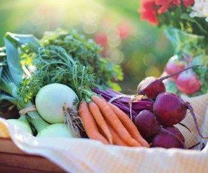 Средство от вредителей сада и огорода