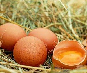 Как хранить белки яиц