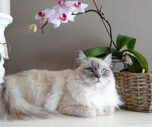 Как отучить кота от цветов