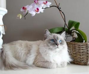 как отучить кота