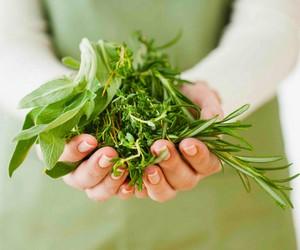 как вырастить травы