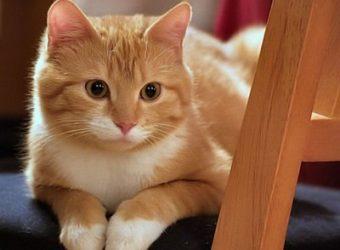 Как поддерживать чистоту в квартире, где живет кошка