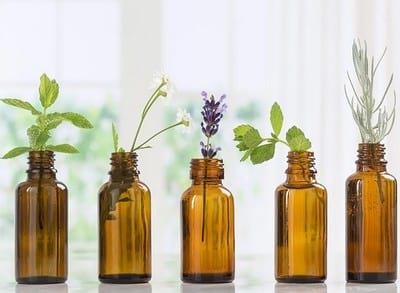 ароматные растения