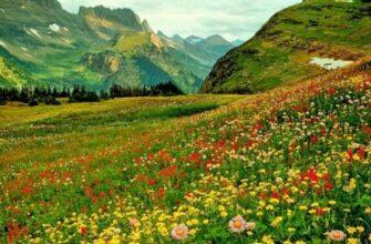 травы для колдовства