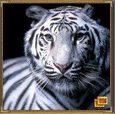 Тигр - символ мужества.
