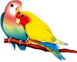 О птицах