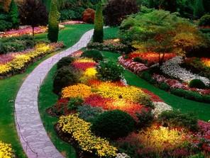 Важные растения для вашего сада (продолжение)