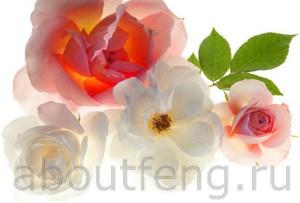 Фэн-шуй символы цветов в вашем доме