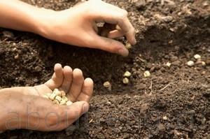ритуал для высадки семян