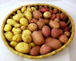 обряд на урожай картофеля
