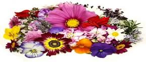 Цветочный фэн-шуй красоты