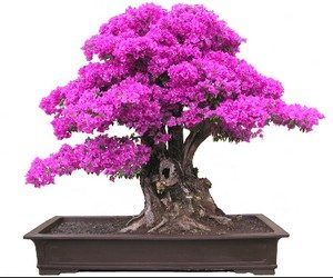 Бонсай — дерево на подносе