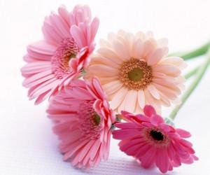 цветы улучшают жизнь