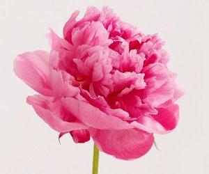 Дарить ли мужчинам цветы