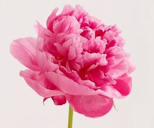 цветы для мужчин