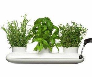 Роль растений в нашей жизни