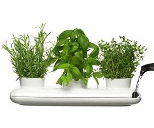 роль растений в доме