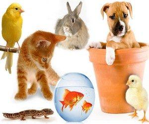 Если домашние животные убегают