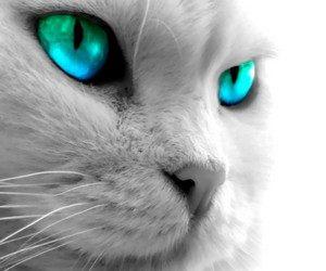 Чтобы кот был спокойным