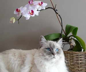 кошки-талисманы