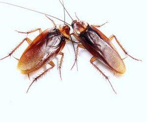 Ритуал в борьбе с тараканами